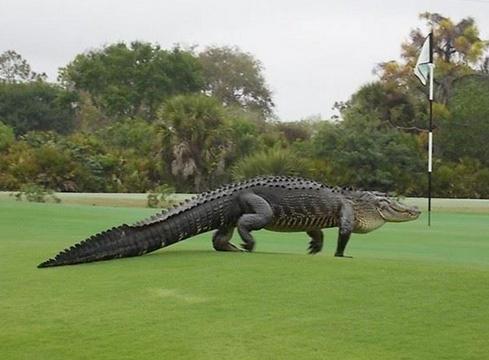 Golf March 03
